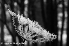 Frost #2