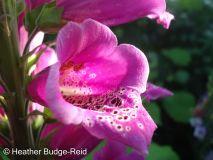 Perthshire Plants #1