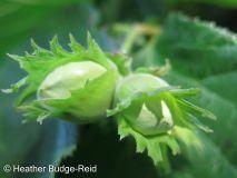 Perthshire Plants #2