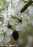 Perthshire Plants #3