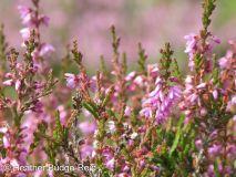 Perthshire Plants #4