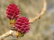 Perthshire Plants #5