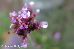 After the Rain #4